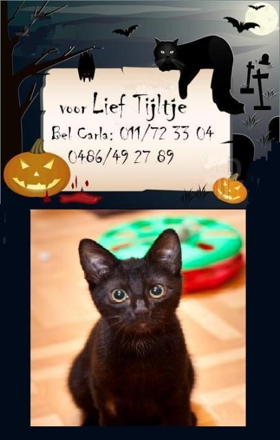 katten,kittens,black willy,haloween