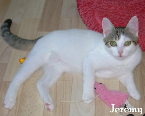kattenenkittens adoptie,happy,pharell williams,jery,chipo,diepenbeek