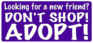 dont-shop-adopt.png